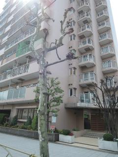 東京都大田区の賃貸マンション ソフトタウン大森 502号室 外観です